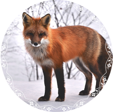 Fox my daemon.png